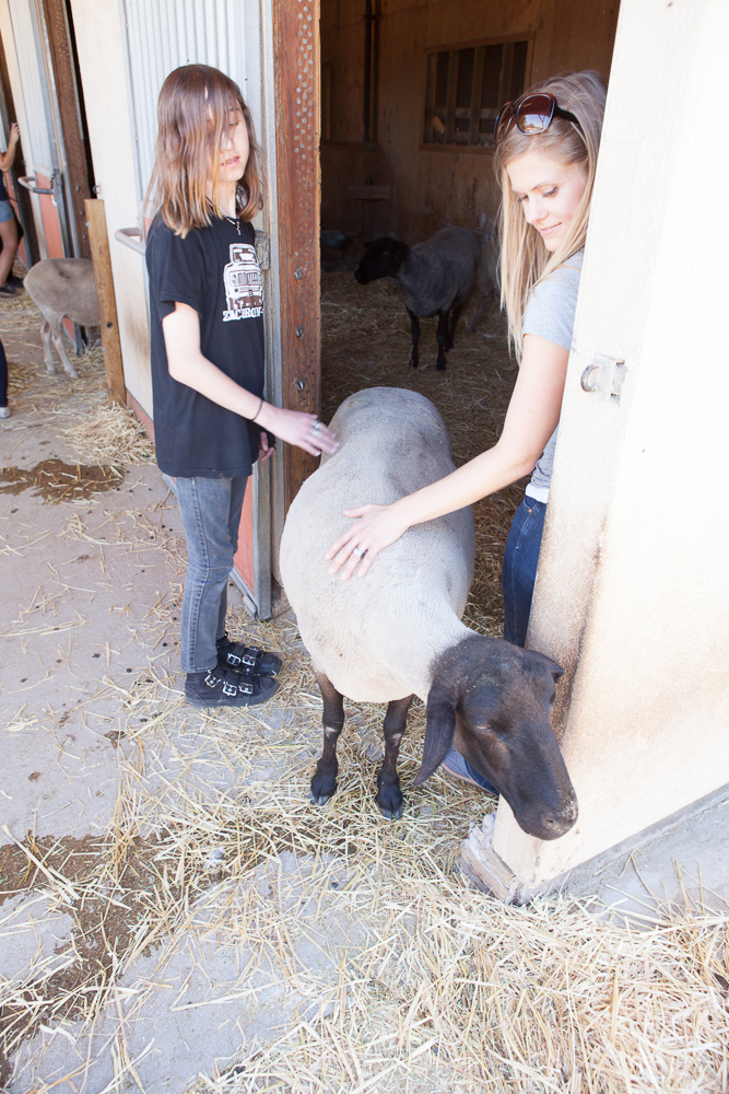 Farm Sanctuary's Animal Acres