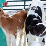 Why You Should Support Keepin' It Kind in the Walk For Farm Animals, Reason #1