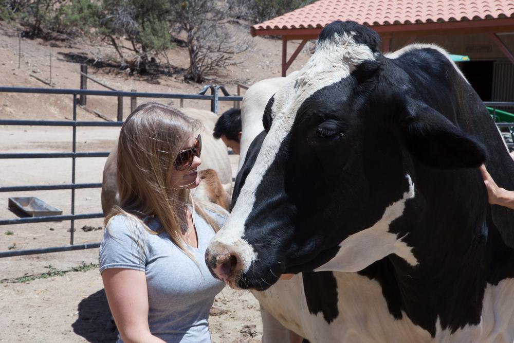 Farm Sanctuary's Animal Acres